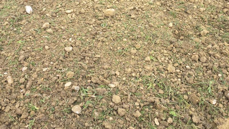 Trinciato compost bio